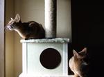 2匹で猫動画