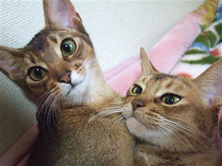 猫2匹くっついて