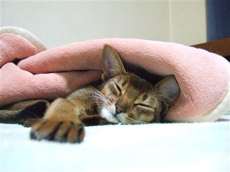 毛布暖かい